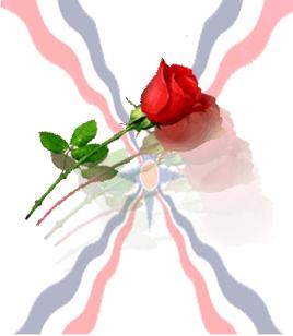 Assyrian flag background for a red rose